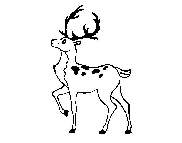 Dibujos De Ciervos Para Colorear E Imprimir: Dibujo De Ciervo Ibérico Para Colorear