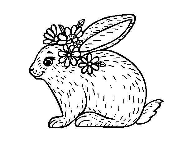 Dibujo de Conejo primaveral para Colorear