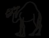 Dibujo de Dromedario