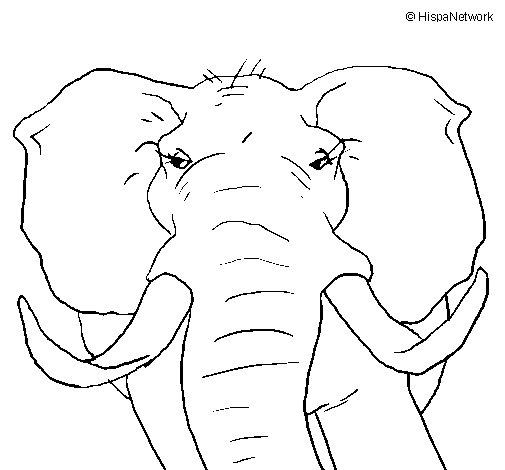 Dibujo de Elefante africano para Colorear