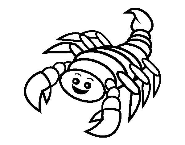 Dibujos De Insectos Para Colorear Para Ninos: Insectos Para Dibujar