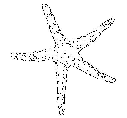 Dibujo de Estrellita de mar para Colorear