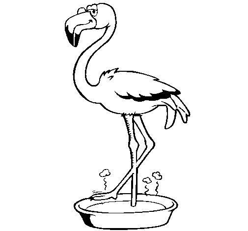 Flamenco animal dibujo - Imagui
