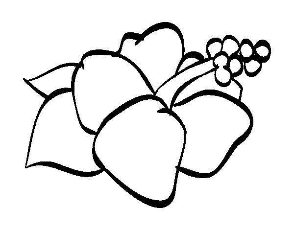 Dibujo De Flor De Cerezo Para Colorear: Dibujo De Flor De Lagunaria Para Colorear