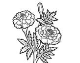 Dibujo de Flor de las maravillas para colorear