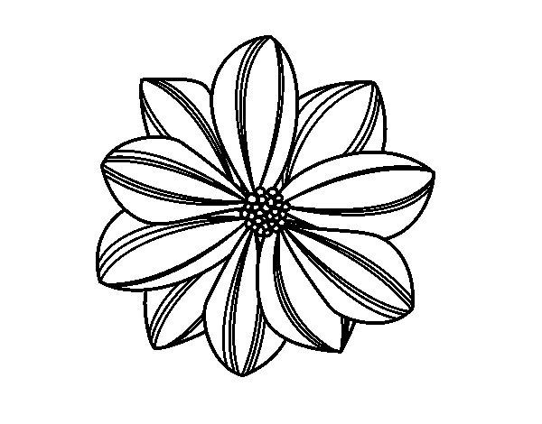 Dibujos Para Colorear De Flora: Dibujo De Flor De Margarita Para Colorear