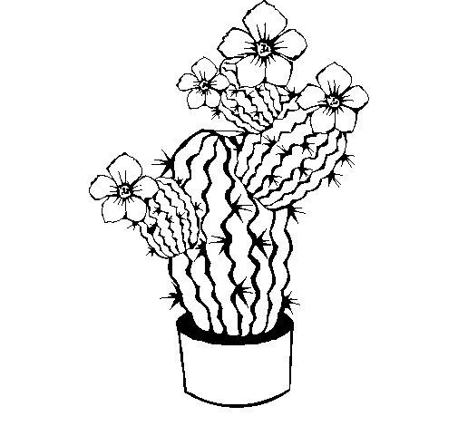 Dibujo de Flores de cactus para Colorear