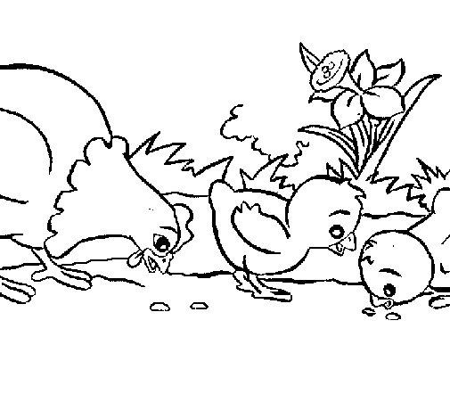 Dibujo de Gallina y pollitos para Colorear