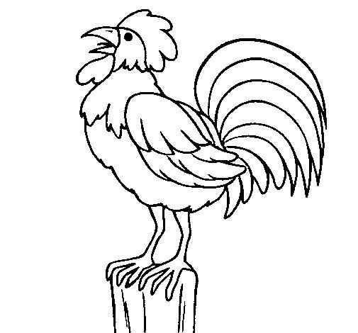 Dibujo de Gallo cantando para Colorear
