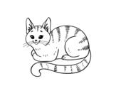 Dibujo de Gato joven