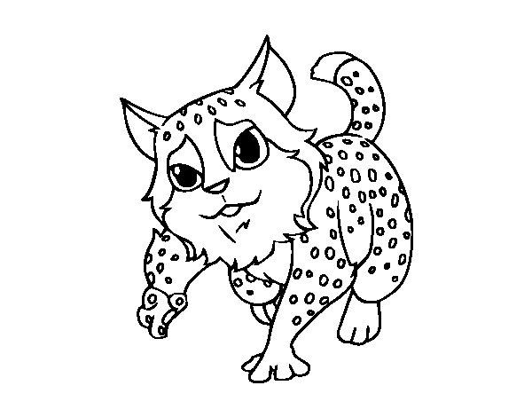 Dibujo de Gato montés para Colorear - Dibujos.net
