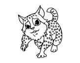 Dibujo de Gato montés para colorear