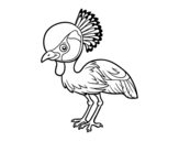 Dibujo de Grulla coronada cuelligris para colorear