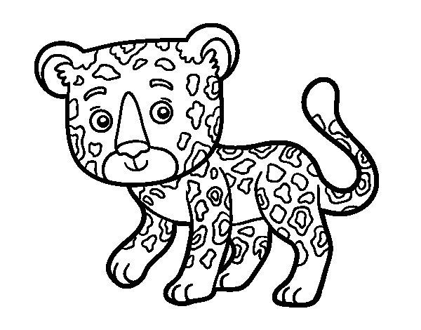 Dibujo Leopardo Para Colorear E Imprimir: Dibujo De Guepardo Joven Para Colorear