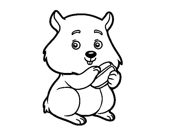 Dibujos Infantiles Para Colorear De Hamsters