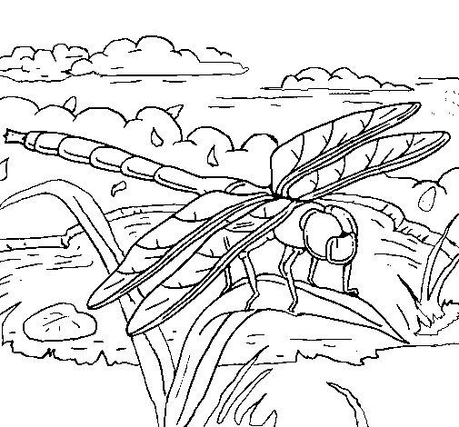 Dibujo de Libélula 2 para Colorear