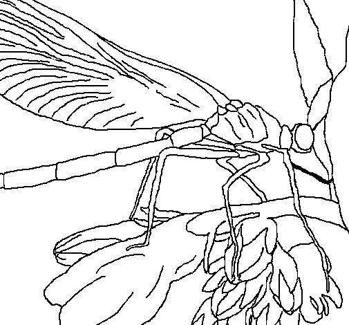 Dibujo de Libélula para Colorear