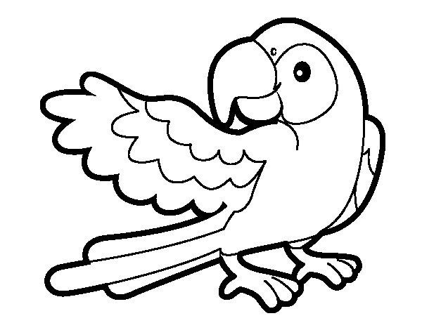 Dibujo de Loro con ala abierta para Colorear