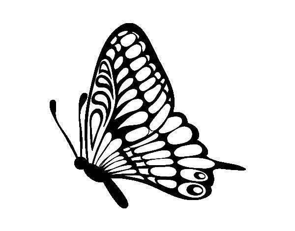 dibujo de mariposa direcci n izquierda para colorear