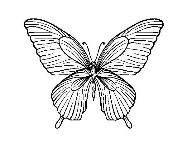 Dibujo de Mariposa tropical para Colorear