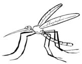 Dibujo de Mosquito 2 para colorear