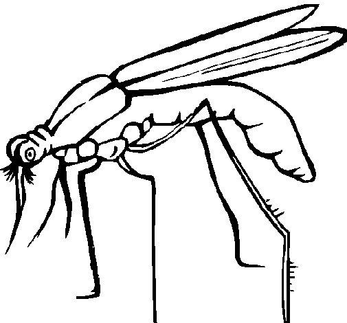 Dibujo de Mosquito para Colorear