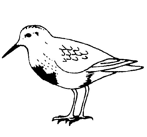 Dibujo de Pájaro para Colorear - Dibujos.net