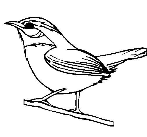 Dibujo de Pájaro silvestre para Colorear - Dibujos.net