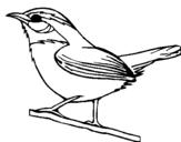 Dibujo de Pájaro silvestre para colorear