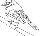 Dibujo de Pájaro tropical