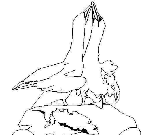 Dibujo de Patos en una roca para Colorear