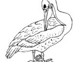 Dibujo de Pelícano para colorear