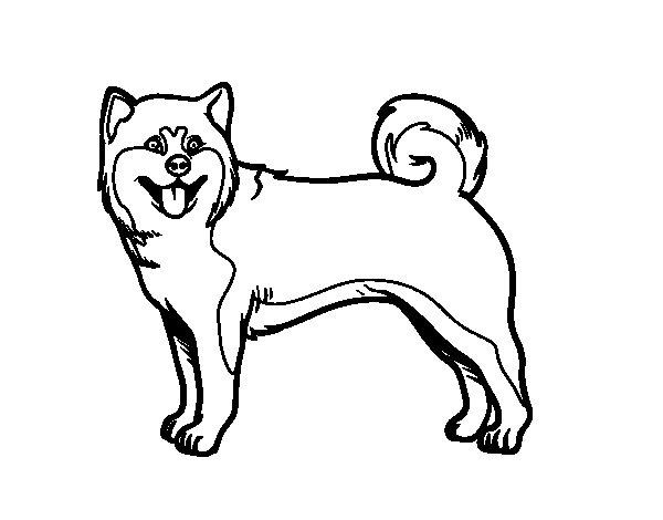 Dibujo de Perro Akita Inu para Colorear