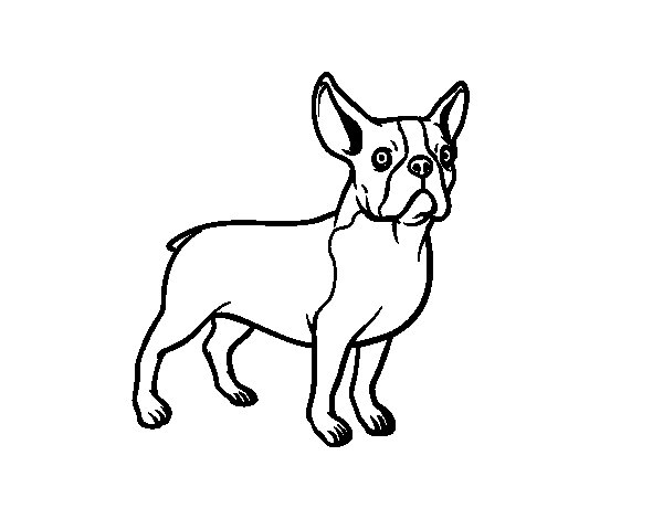 Dibujo de Perro bulldog francés para Colorear