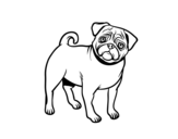 Dibujo de Perro carlino para colorear