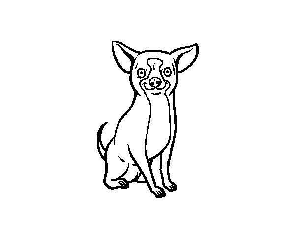 Dibujo De Perro Chihuahua Para Colorear