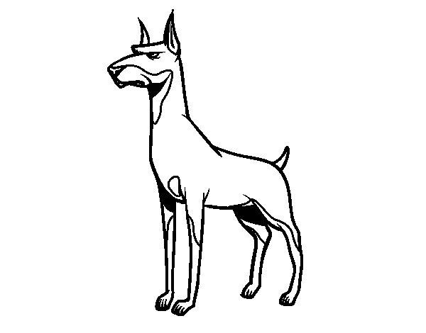 Dibujo de Perro dóberman para Colorear