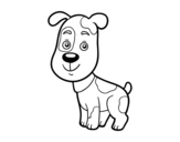 Dibujo de Perro domestico para colorear