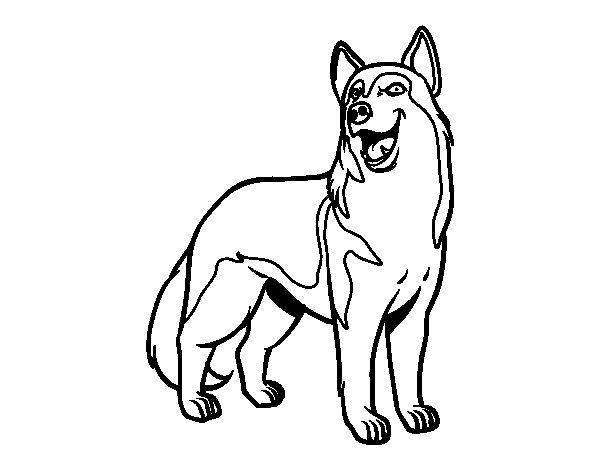 Lobos Dibujos. Cool Dibujos De Anime. Affordable Lobos Colorear ...