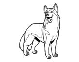 Dibujo de Perro lobo para colorear