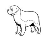 Dibujo de Perro San bernardo para colorear