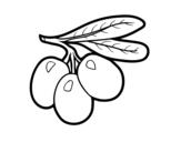 Dibujo de Rama de aceitunas para colorear