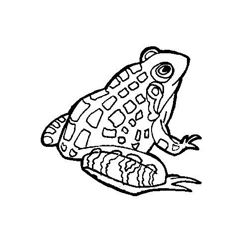 Dibujo de rana 1 para colorear - Dessin d un crapaud ...