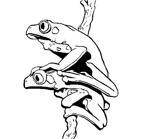Dibujo de Ranas para Colorear