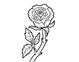 Dibujo de Rosa silvestre