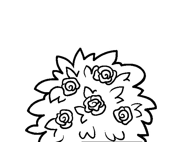 Dibujo de Rosal silvestre para Colorear