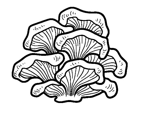 Dibujo de Seta pleurotus para Colorear