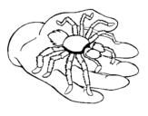 Dibujo de Tarántula 1 para colorear