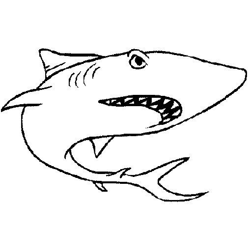 Dibujo de Tiburón para Colorear