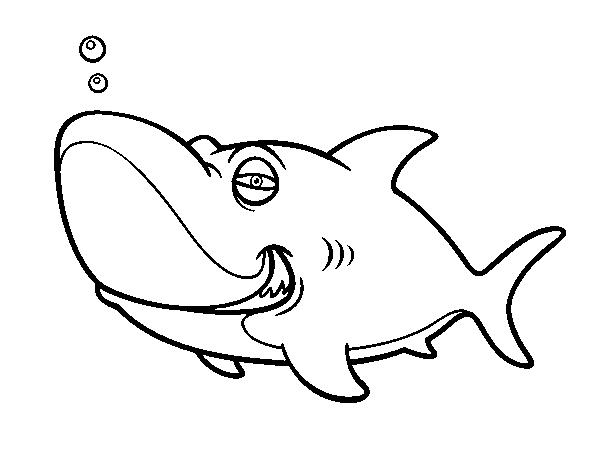 tiburon tigre 2 اجمل صور تلوين صور القرش 2016